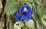 Blue Flowers Names 105 Cool Hd Wallpaper