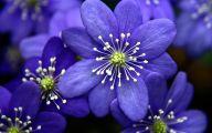 Blue Flowers Names 106 Background Wallpaper