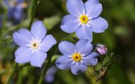 Blue Flowers Names 107 High Resolution Wallpaper