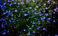 Blue Flowers Pictures 2 Cool Wallpaper