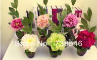 Cheap Green Flowers For Sale 12 High Resolution Wallpaper
