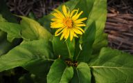 Fall Blooming Yellow Flowers 10 Free Wallpaper