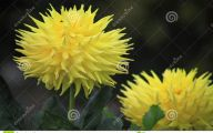 Fall Blooming Yellow Flowers 12 Wide Wallpaper