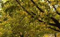 Fall Blooming Yellow Flowers 13 High Resolution Wallpaper
