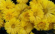 Fall Blooming Yellow Flowers 14 Cool Hd Wallpaper