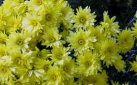 Fall Blooming Yellow Flowers 16 High Resolution Wallpaper
