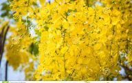 Fall Blooming Yellow Flowers 21 High Resolution Wallpaper