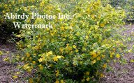 Fall Blooming Yellow Flowers 25 Desktop Background
