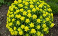 Fall Blooming Yellow Flowers 26 High Resolution Wallpaper