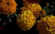 Fall Blooming Yellow Flowers 28 Desktop Background