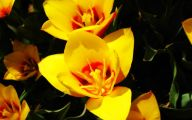 Fall Blooming Yellow Flowers 31 High Resolution Wallpaper