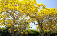 Fall Blooming Yellow Flowers 5 Hd Wallpaper