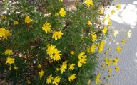 Fall Blooming Yellow Flowers 6 Free Wallpaper