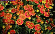 Fall Blooming Yellow Flowers 8 Free Wallpaper