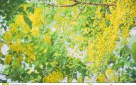 Fall Blooming Yellow Flowers 9 Free Hd Wallpaper