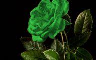 Flowers Green Bay 13 Free Hd Wallpaper