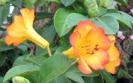 Flowers Green Bay 38 Free Wallpaper