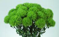 Green Flowers Arrangements 25 Desktop Background
