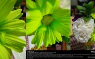 Green Flowers Arrangements 7 Wide Wallpaper