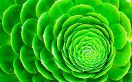 Green Flowers Art 7 Free Hd Wallpaper