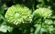 Green Flowers Chicago 13 Cool Hd Wallpaper