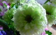 Green Flowers For Bouquets 16 Cool Hd Wallpaper