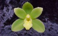 Green Flowers For Sale Online 22 Desktop Background