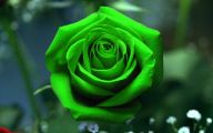 Green Flowers Meaning 41 Background