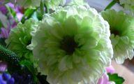 Green Flowers Meaning 44 Desktop Background