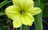 Green Flowers Names 8 Widescreen Wallpaper