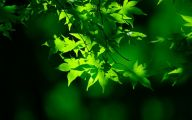 Green Flowers Natural 30 Widescreen Wallpaper