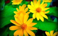 Green Flowers Tumblr 18 High Resolution Wallpaper