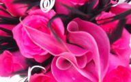Live Black Roses  3 Cool Hd Wallpaper