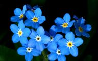Lovely Blue Flowers  8 Background