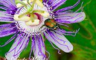 Lovely Lady Purple Flowers 15 Desktop Background