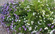 Lovely Lady Purple Flowers 36 Wide Wallpaper