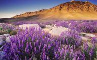 Lovely Lady Purple Flowers 37 High Resolution Wallpaper