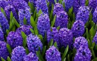 Meaningful Blue Flowers  12 Hd Wallpaper