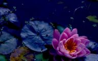 Meaningful Blue Flowers  22 Desktop Wallpaper