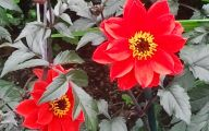 Names Of Red Flowers 3 Widescreen Wallpaper