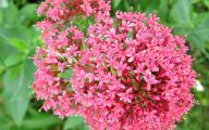 Perennial Red Flowers Pictures 20 Background