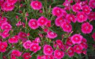 Perennial Red Flowers Pictures 5 Widescreen Wallpaper