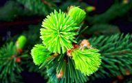 Pictures Of Green Flowers 38 Desktop Wallpaper