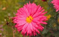 Pink Flowers And Their Meanings 16 Cool Hd Wallpaper