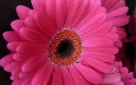 Pink Flowers And Their Meanings 5 Widescreen Wallpaper