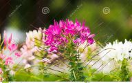 Pink Flowers And Their Names 10 Hd Wallpaper