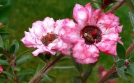 Pink Flowers And Their Names 26 Free Hd Wallpaper