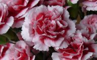 Pink Flowers And Their Names 7 Widescreen Wallpaper