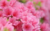 Pink Flowers Arrangements 14 Cool Hd Wallpaper