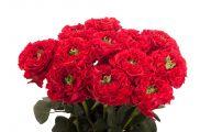 Pink Flowers Available In November 26 Desktop Background